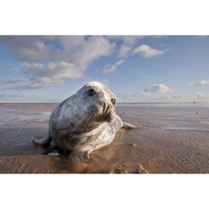 Seal on the east coast of UK